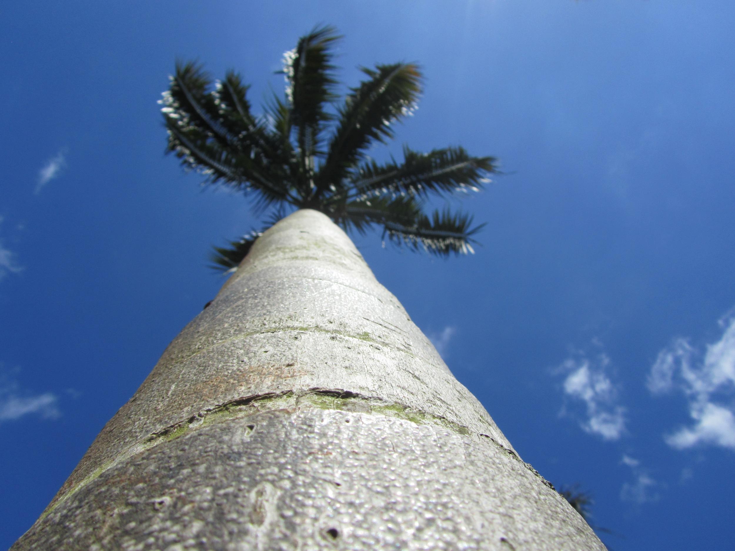 Palm Tree Australia Zoo